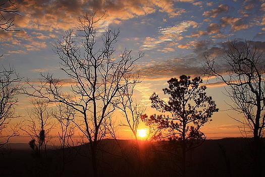 FD Roosevelt State Park Pine Mountain Ridge GA by Mountains to the Sea Photo