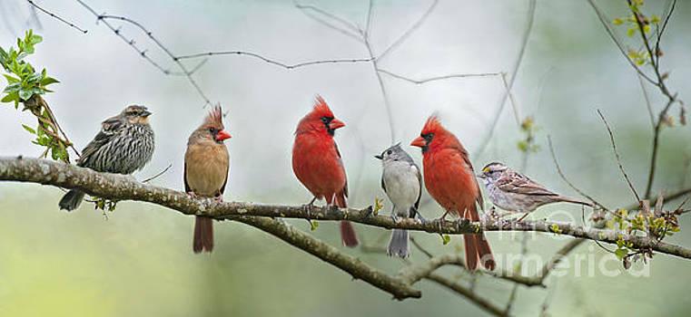 Fear Not Little Flock by Bonnie Barry