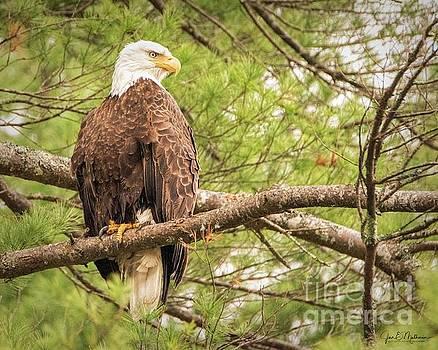 Fearless Spirit - Eagle by Jan Mulherin