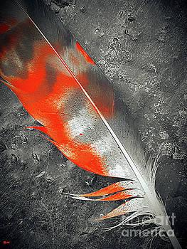 Feather by Daniel Janda