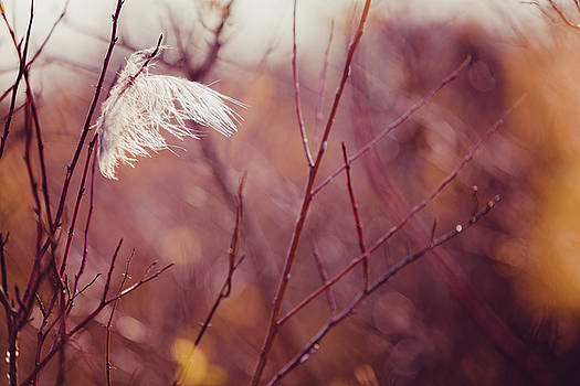 Feather In The Wind by Debi Bishop
