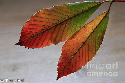 Feather Leaves by Tracy Hall