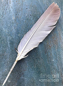 Feather of a Dove by Leona Atkinson