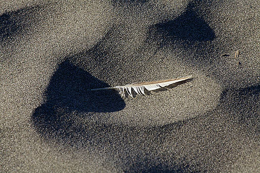 Feather on the Beach by Jane Eleanor Nicholas
