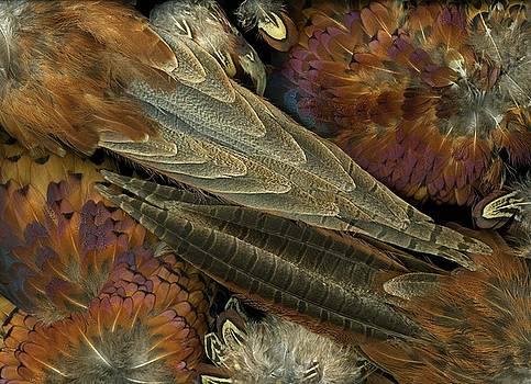Christian Slanec - Featherdance