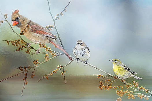 Feathered Friends by Bonnie Barry