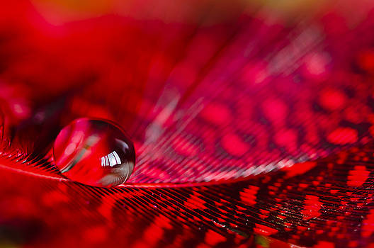 Christine Kapler - Feathery world in water drop