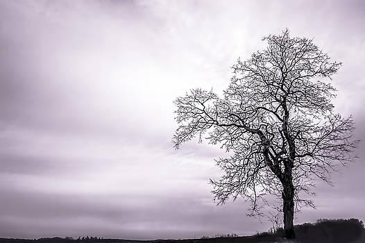 February Morning by Wayne King
