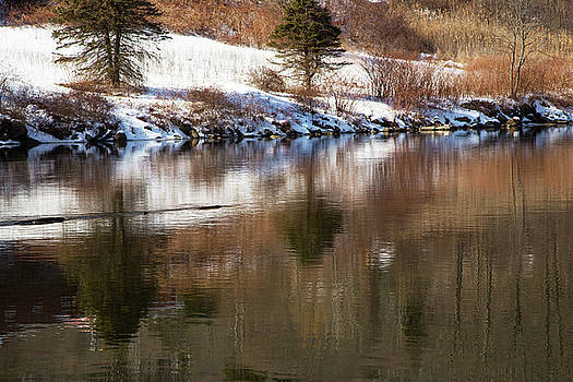 Karol Livote - February Reflections