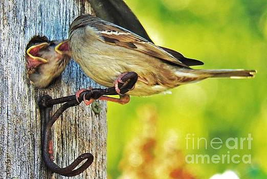 Judy Via-Wolff - Feeding Baby Sparrows 1