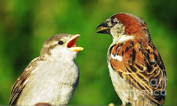 Judy Via-Wolff - Feeding Baby Sparrows 2