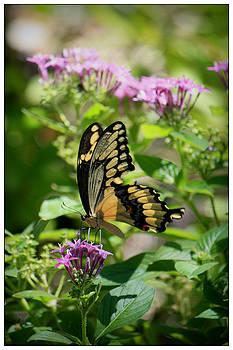 Feeding the Butterflies by Mandy Shupp