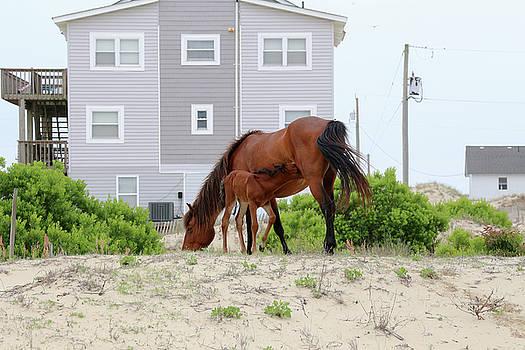 Feeding Foal by David Stasiak