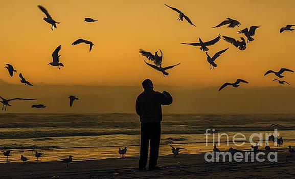 Feeding Seagulls Silhouette by Edie Ann Mendenhall