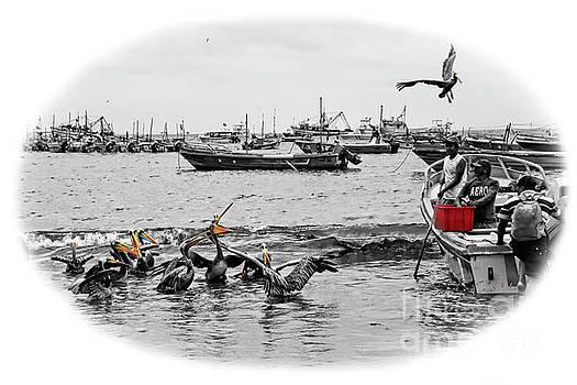 Feeding Time At Puerto Lopez, Ecuador by Al Bourassa