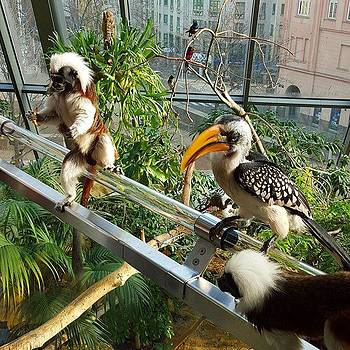 Feeding Time At The Zoo In #vienna by Dante Harker