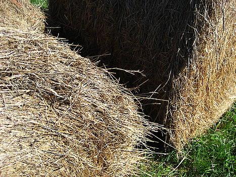 Feel the Hay by Sheryl Burns