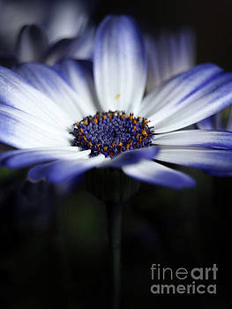 Feeling Blue In The Garden Shadows 3 by Dorothy Lee