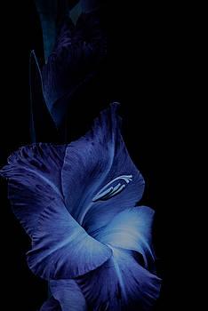 Feeling Blue by Richard Macquade