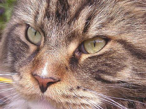 Feline Perfection by Joanne Simpson