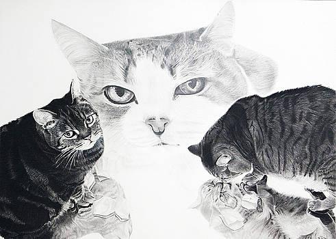 Felines by Raymond Potts