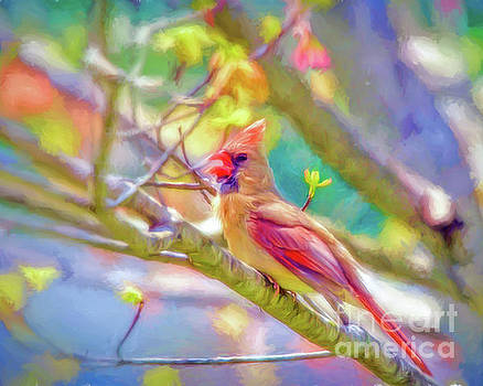 Female Cardinal Sings by Kerri Farley