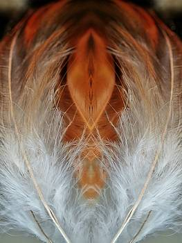 Female Feathers by Lorella Schoales