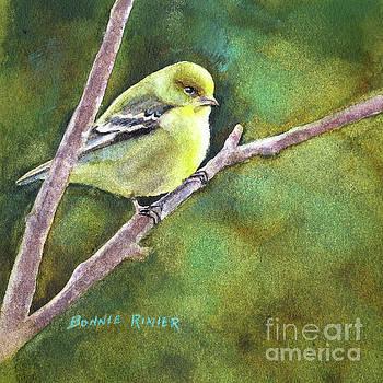 Female Goldfinch by Bonnie Rinier