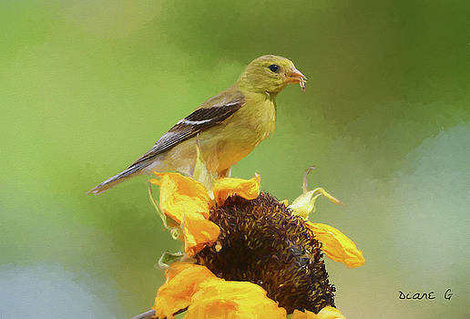Female Goldfinch by Diane Giurco