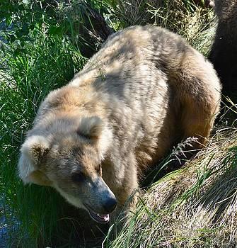 Patricia Twardzik - Female Grizzly Bear in the Woods