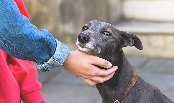 Jacek Wojnarowski - Female Hand Petting a Dog A