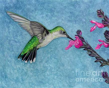 Female Ruby Throated Hummingbird by Sherry Goeben