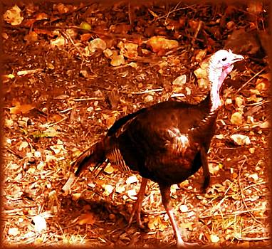 Colette Merrill - Female turkey