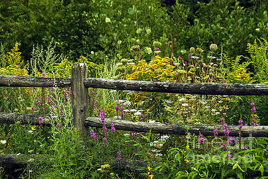 Fence and Wildflowers by Roger Soule