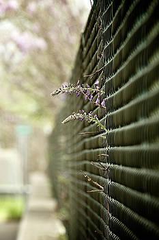 Fence Escape by Patrick Biestman