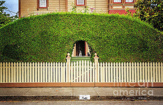 Fence, Hedge, Dog and Cat by Craig J Satterlee