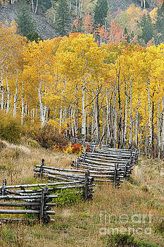 Fence in Fall by Tibor Vari