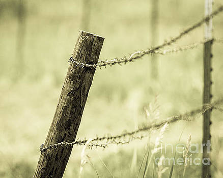 Fence Post and Barbed Wire by Pam  Holdsworth