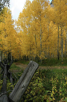 Fence  to the yellow by Teresa Stevens