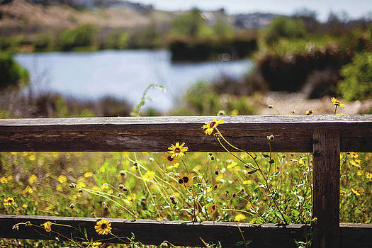Fenced In by April Reppucci