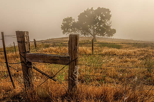 Fenced in Fog by Peter Tellone