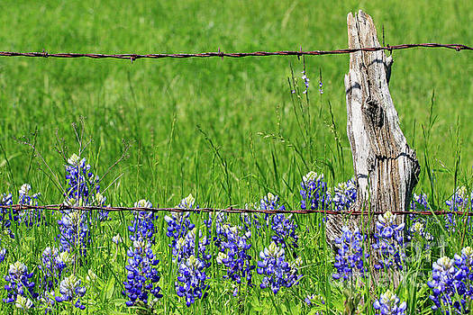 Fenced In by Jerry Bunger