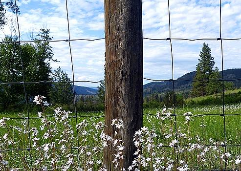 Fenceline Wildflowers by Will Borden