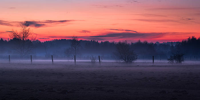 Fences and Bare Trees at Dusk by Alexander Kunz
