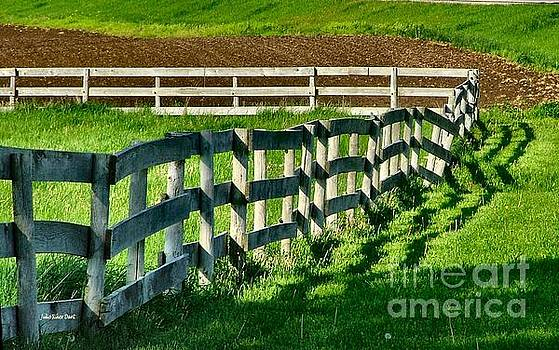 Fences and Shadows by Julie Dant