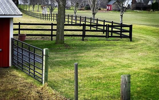 Dee Flouton - Fences