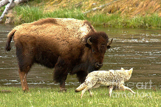 Adam Jewell - Fending Off The Coyote