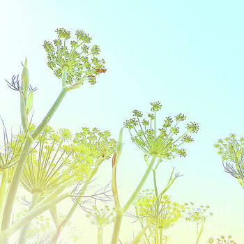 Fennel as high as an elephant's eye by Cindy Garber Iverson