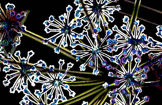 Fennel Inflorescence in Neon 2 by Ajp
