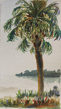Fennimore Palm by Libby  Cagle